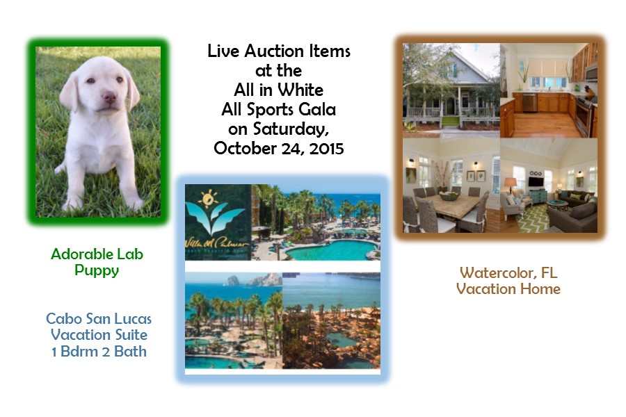 Gala Live Auction